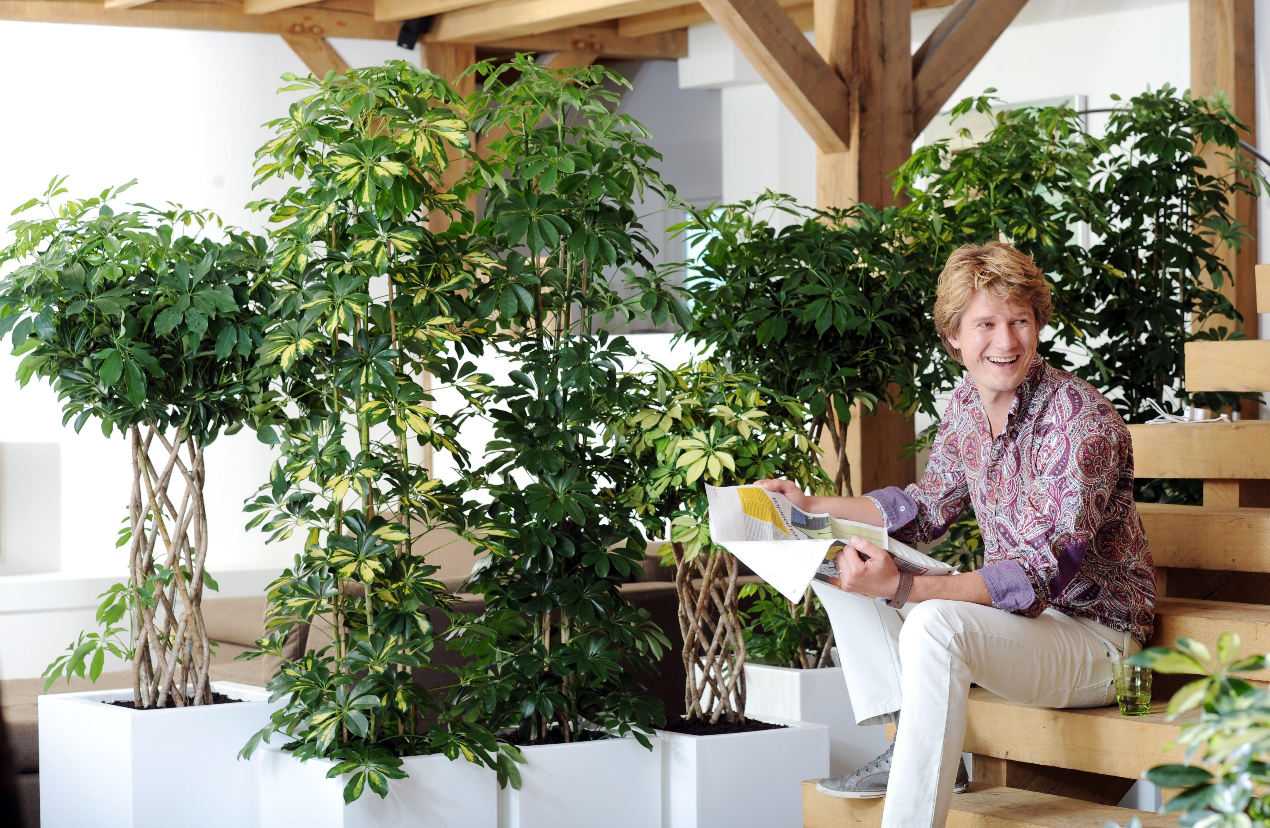 Aktuell | Blumen Risse | Pure - Presseportal Blumen Und Zimmerpflanzen Helfen Den Stress Abzubauen